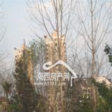 09年2月12日金山公园项目实景图